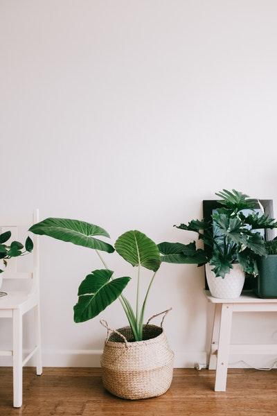 Déco pas cher : osez les plantes